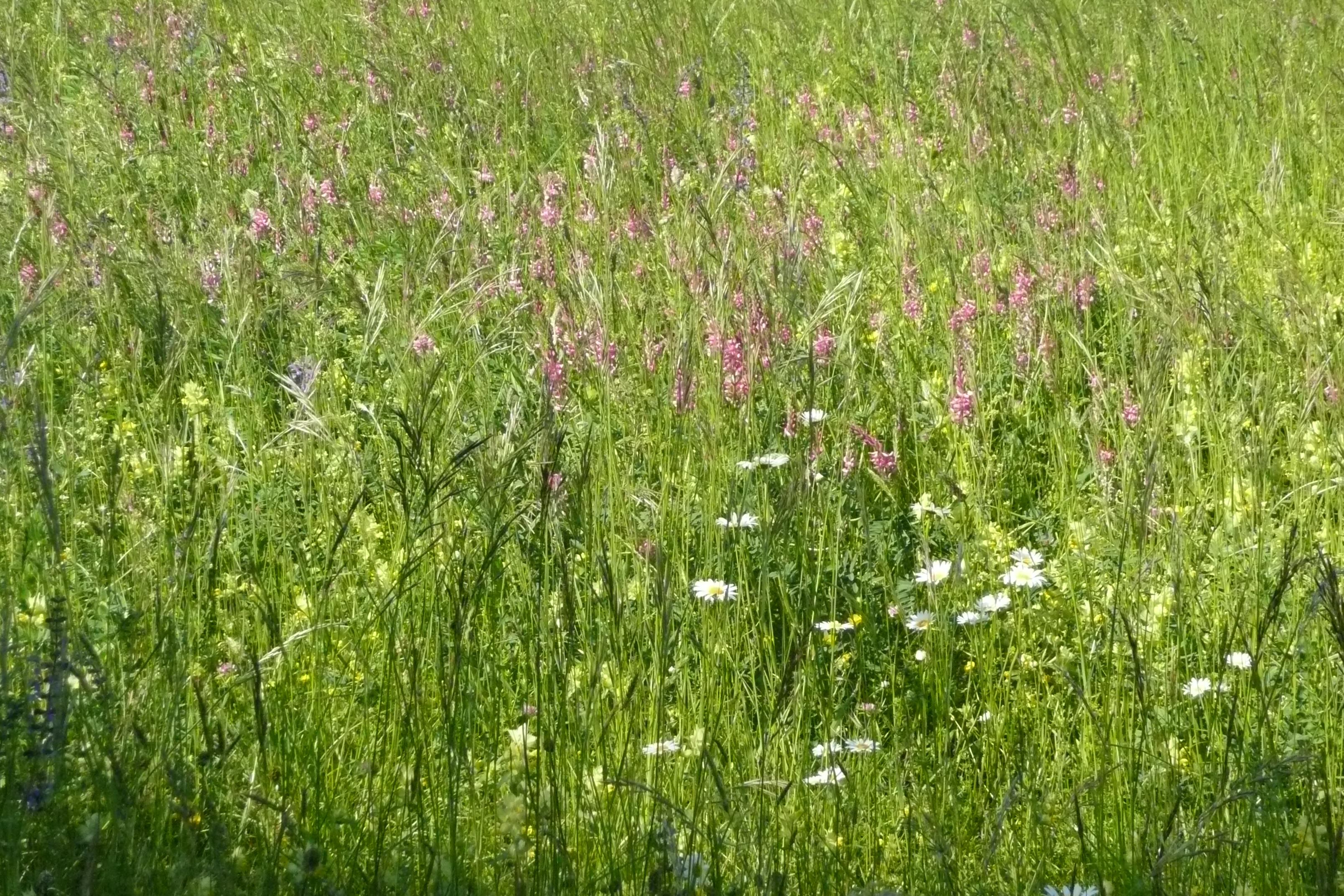 l homme ses jours sont comme l herbe comme la fleur des champs il fleurit psaume 102 103. Black Bedroom Furniture Sets. Home Design Ideas
